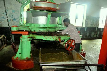 CP TH tea crusher