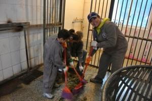 Chengdu poop scoop