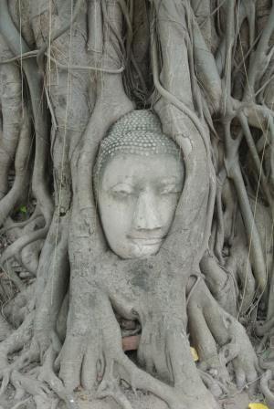 bandkok tree buddha