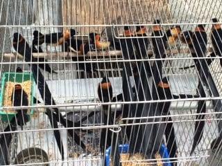 bird market 4