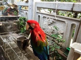 bird market 5