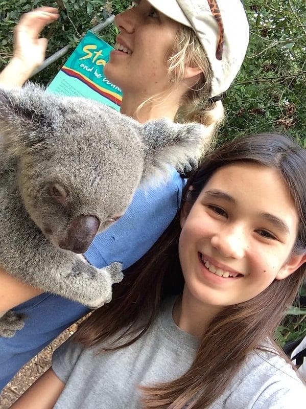 cairn-koala-web-2