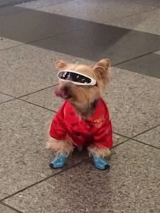 cool dog2
