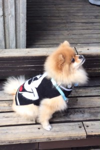 mickey dog